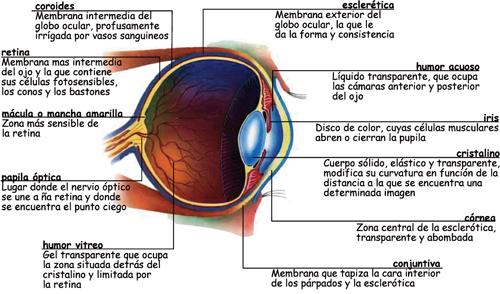Medicina Aeronáutica-Fisiología de la Visión – ASOC. PASIÓN POR VOLAR