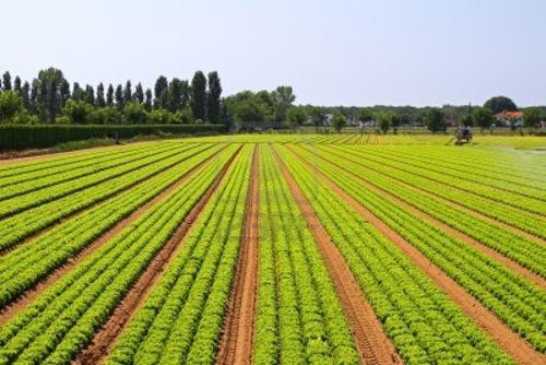 Los drones en la agricultura asoc pasi n por volar for Que son cultivos asociados